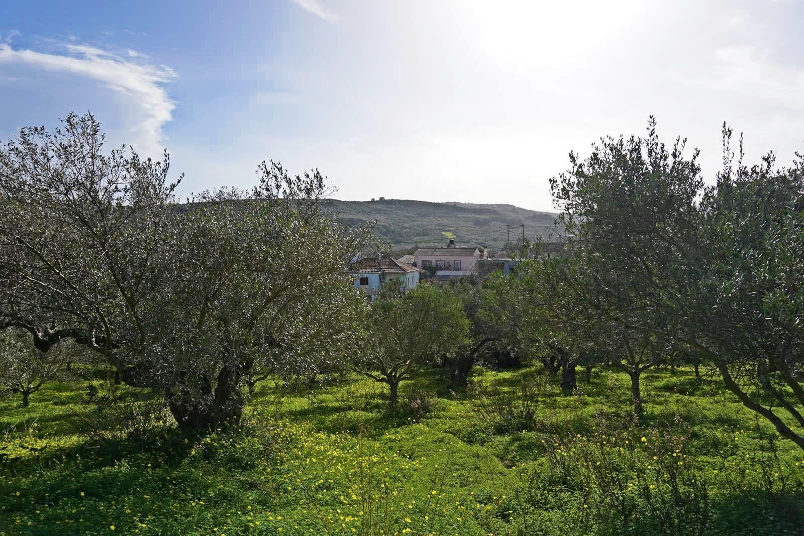 Plot in Drakona with mountains view near Kolymbari