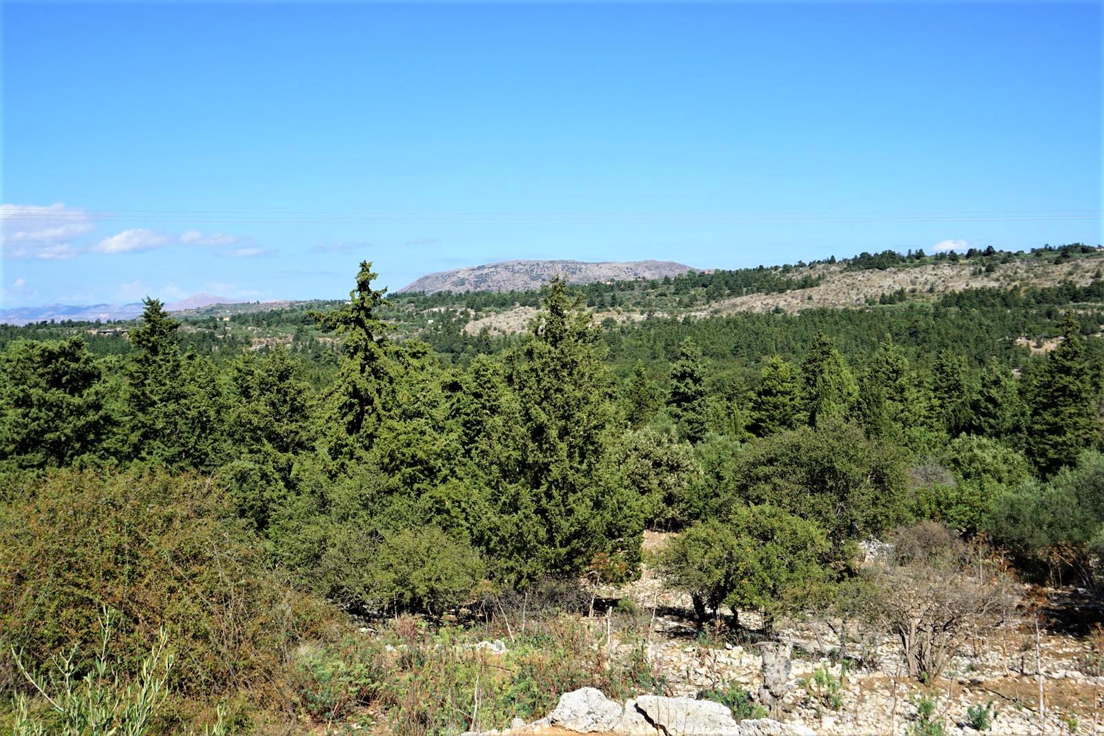 Działka z widokiem na cyprysy w Sellia